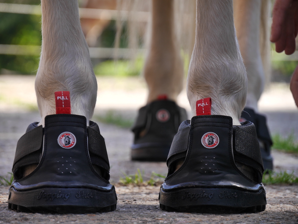 Equine Fusion Trekking fitted by HoofWear