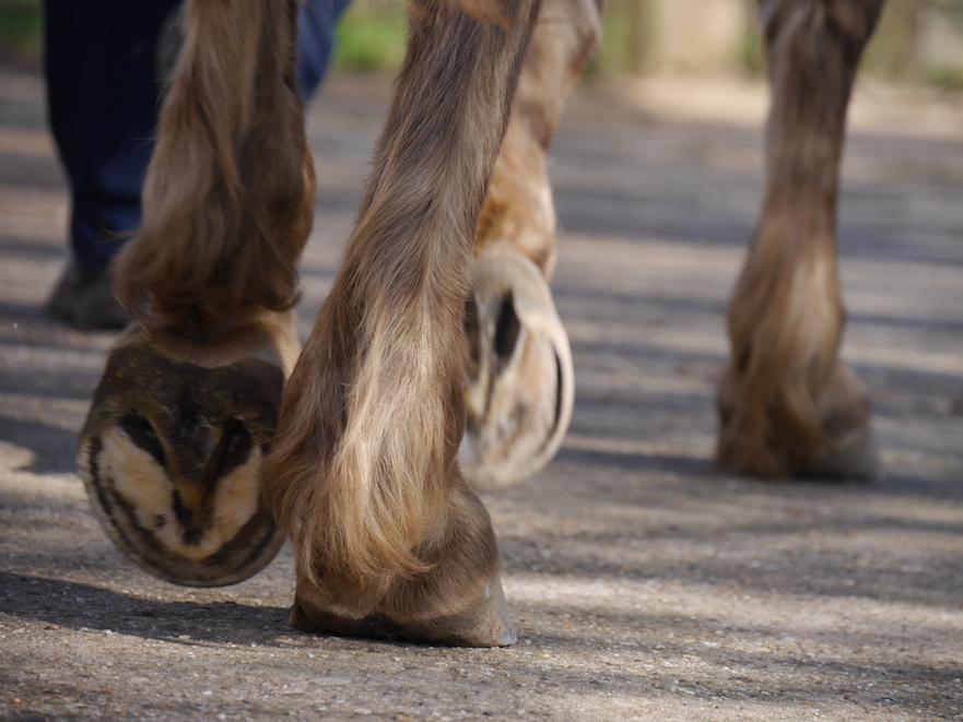 Help: mijn paard heeft een dunne zool!