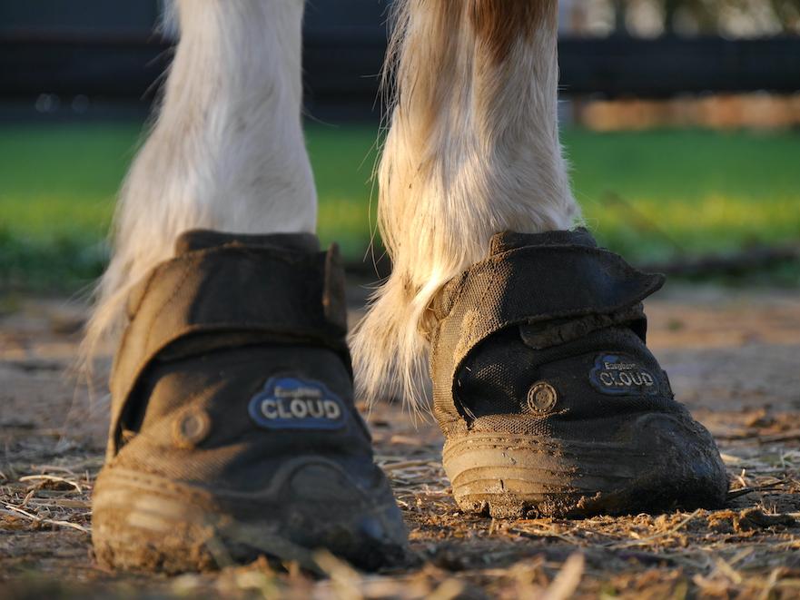 Easyboot Cloud speciaal voor hoefbevangen paarden en pony's
