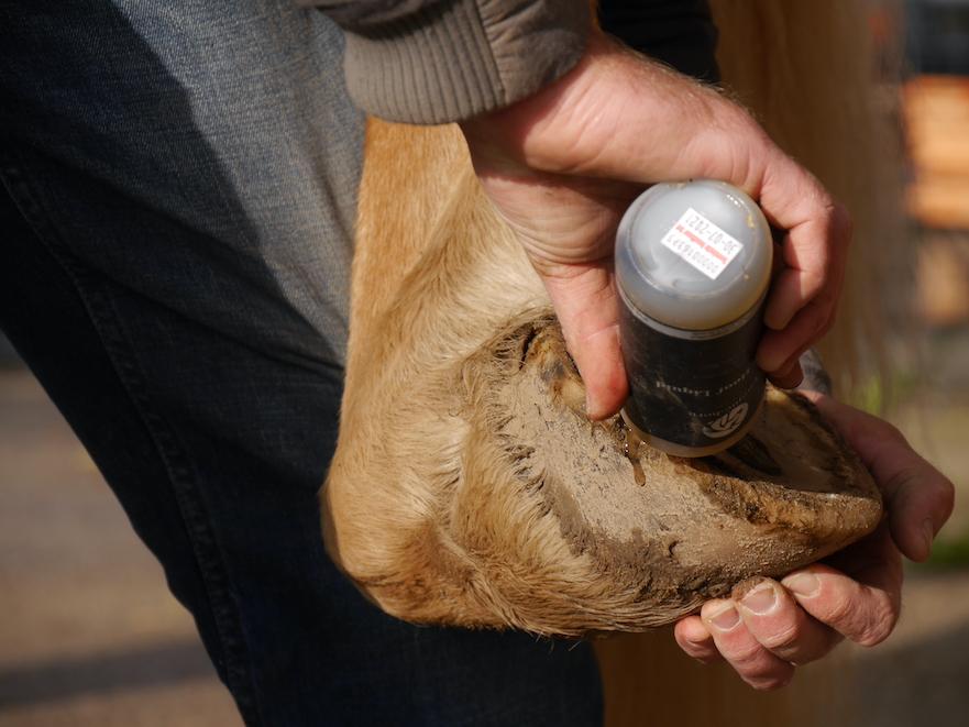 Unique-horn Silver Hoof Liquid bij rotstraal