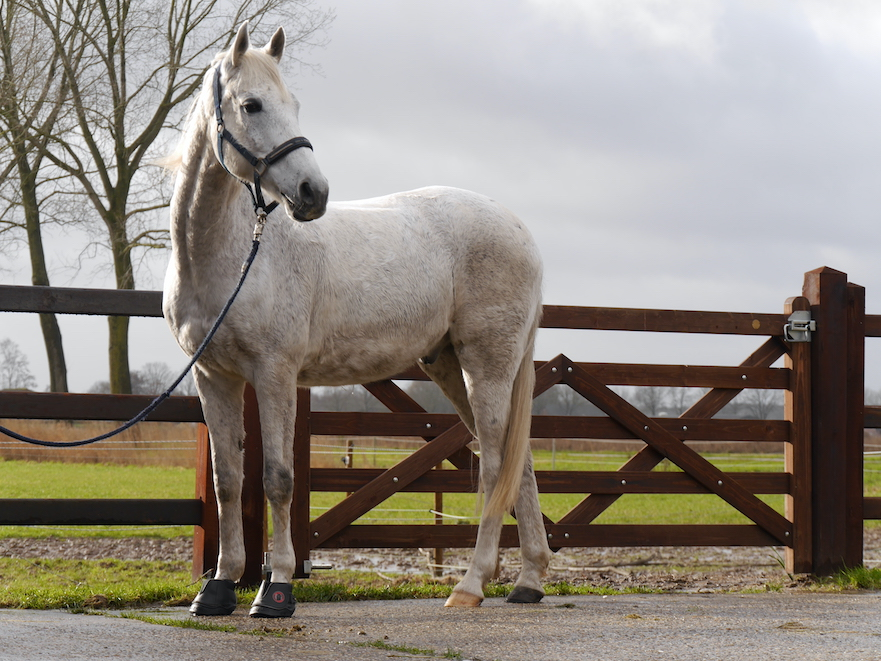 Equine Fusion Active hoefschoenen voor paarden met te korte hoeven