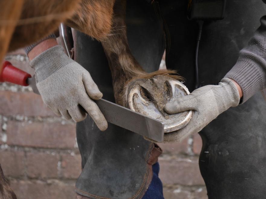 pferd hoofplane
