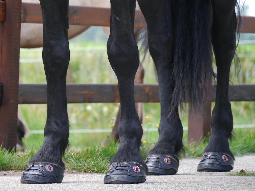 Equine Fusion 24/7 lijmschoen voor paarden