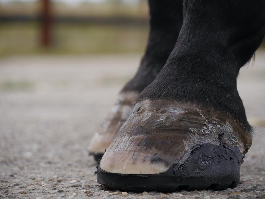 EasyShoe Sport kunststof lijmbeslag voor paarden