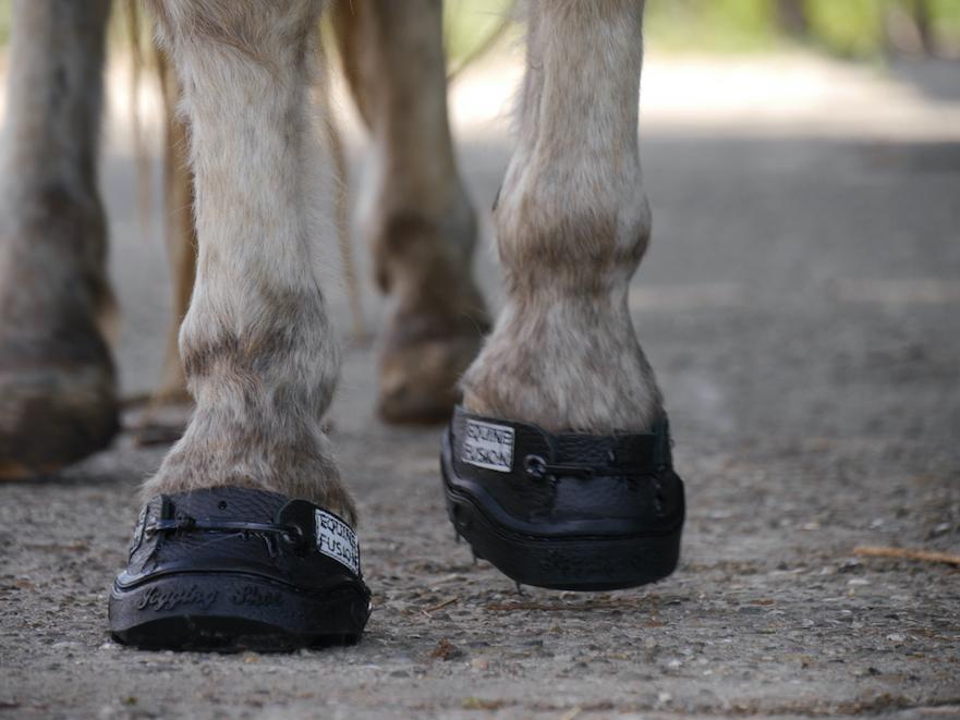 Equine Fusion 24/7 lijmschoen voor pony's