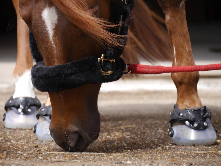 hoefschoenen bij sportpaard