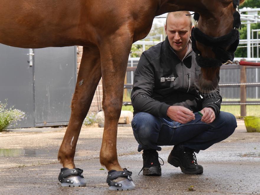 paard op hoefschoenen