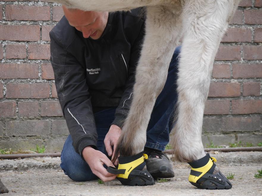 Flex hoof boot passen